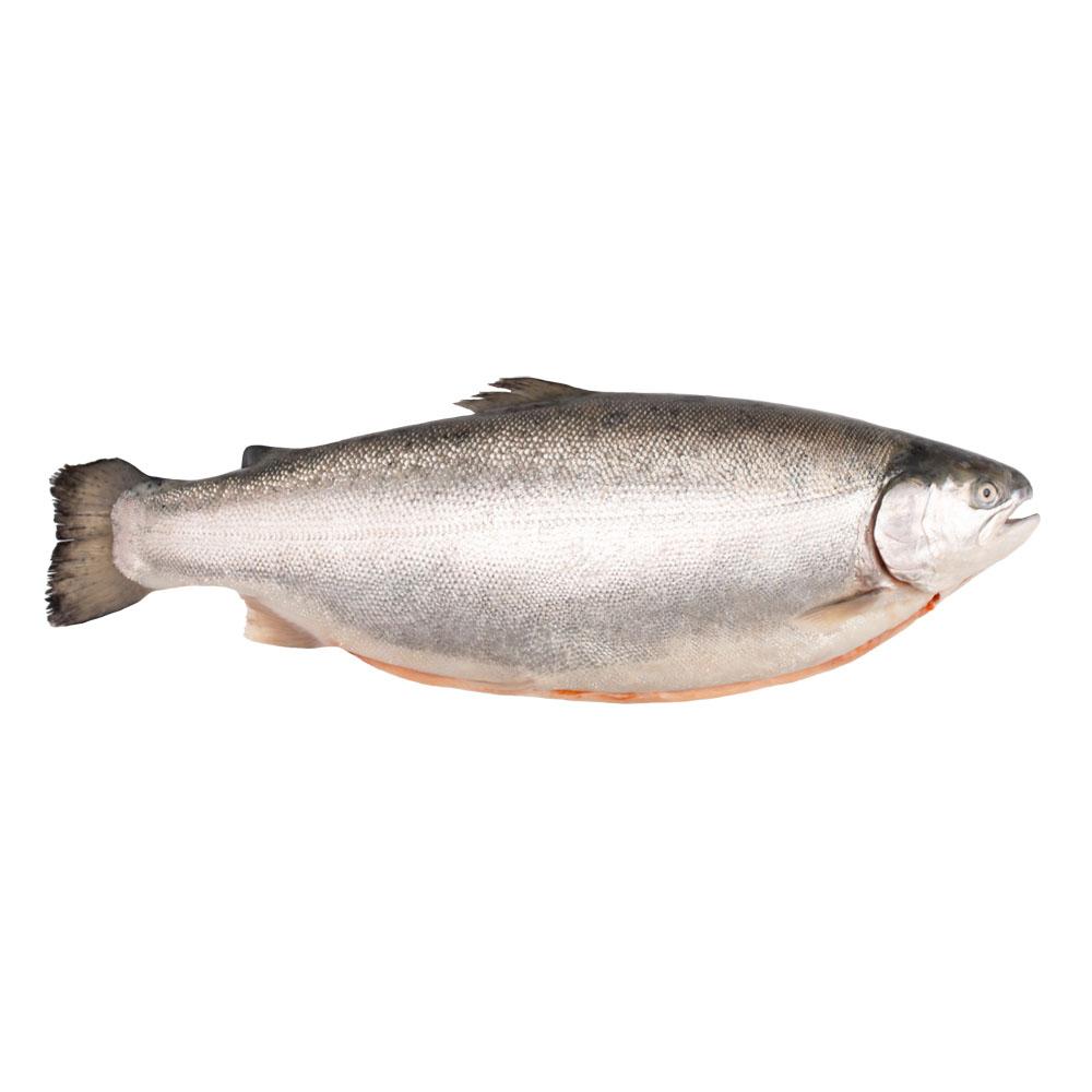 Форель морская с/г потр 3-4 охл кг