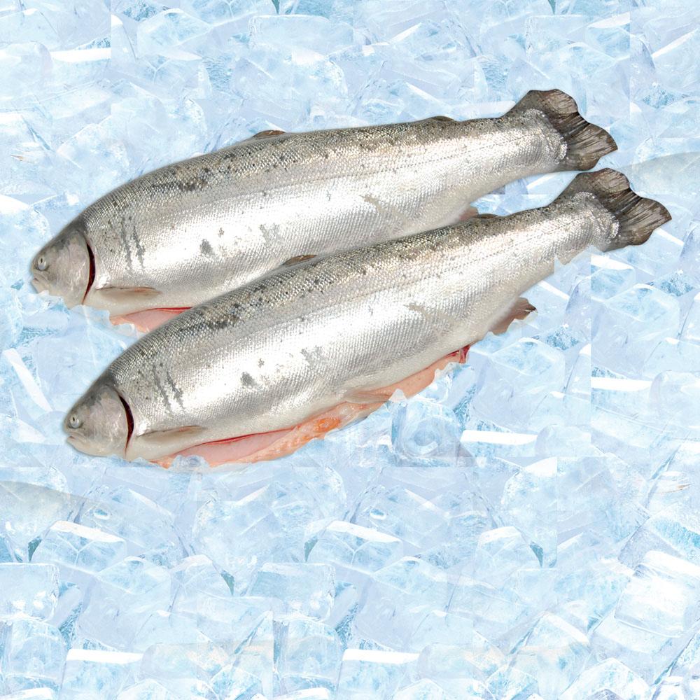 Форель морская с/г потр 1-3 охл кг